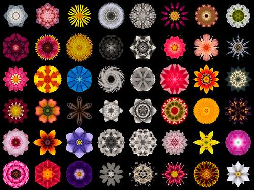 The Flower Mandalas Project